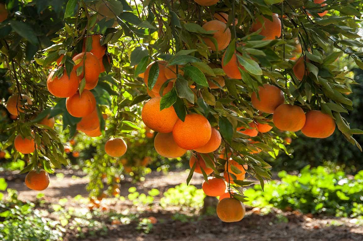 bg-chem-free-agricola-lusia.jpg