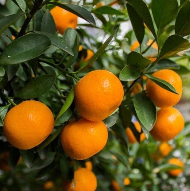 mandarino-menu-agricola-lusia.jpg